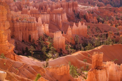 Bryce Canyon - backlit light